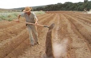 adubação do solo/imagem ilustrativa