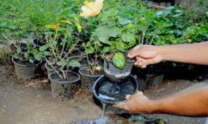 Cuidados para evitar a dengue