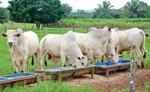 Estado desenvolve projetos e aponta medidas para fortalecer agropecuária no Tocantins