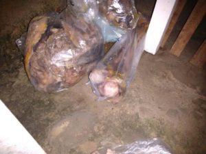 restos mortais de josé