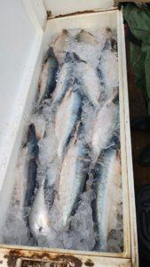 Cerca de 200 quilos de pescado são apreendidos pela PM em  Miracema